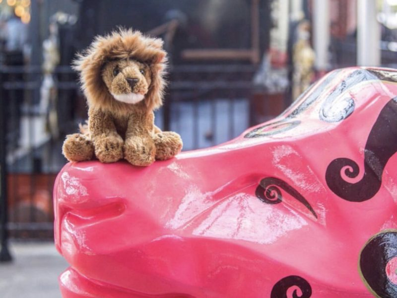 LION SHOP NOW OPEN!
