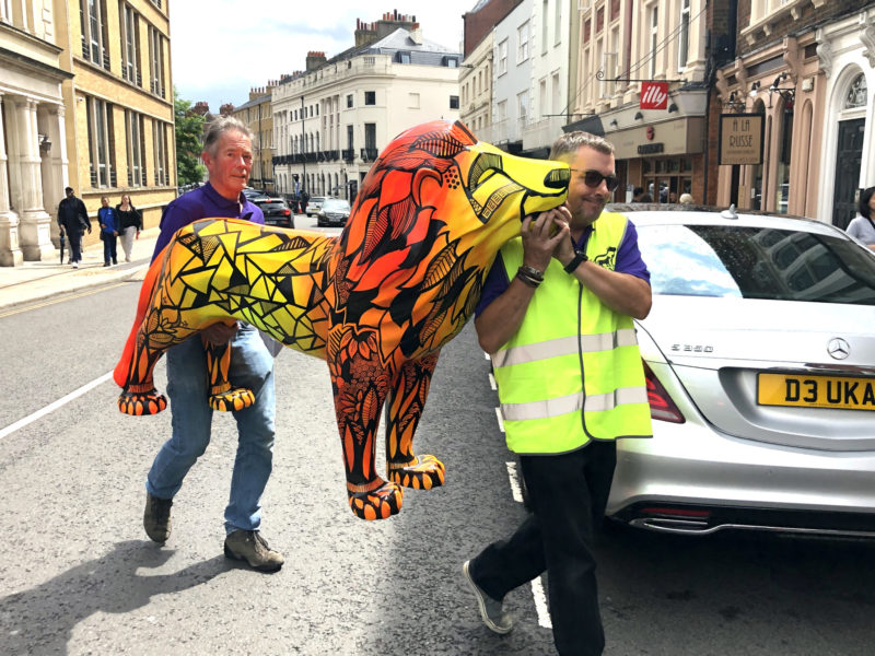 Lions in new homes for Christmas!